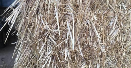 new season hay crops