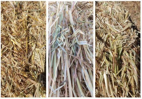 2019/20 hay crops victoria